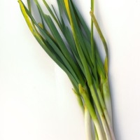 What is Green Garlic?