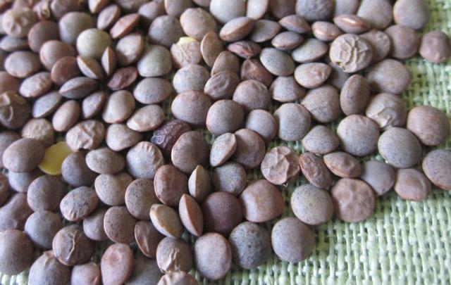 Organic Pardina Lentils