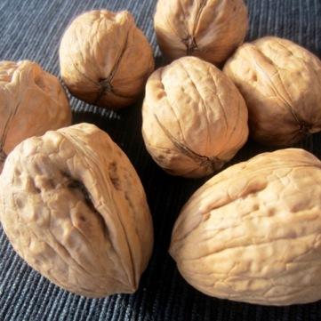Walnut myfavouritepastime.com