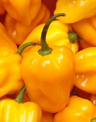 Hainan Yellow Lantern chilli myfavouritepastime.com