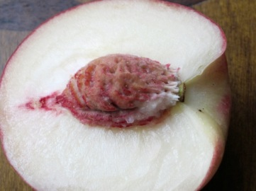 Large White Fleshed Peach myfavouritepastime.com