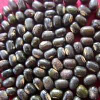 What is Urad Dal (Black Gram)?