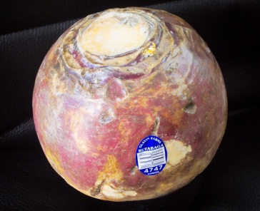 Rutabaga rear and front view myfavouritpastime.com