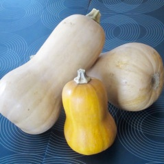 What is Honeynut Squash? myfavouritepastime.com