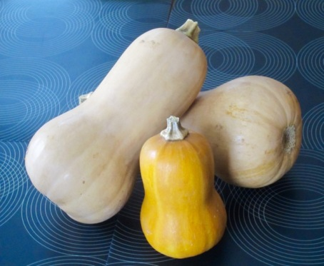 Butternut and Honeynut Squash? myfavouritepastime.com