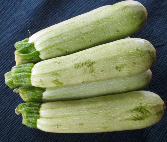 Grey Zucchini myfavouritepastime.com
